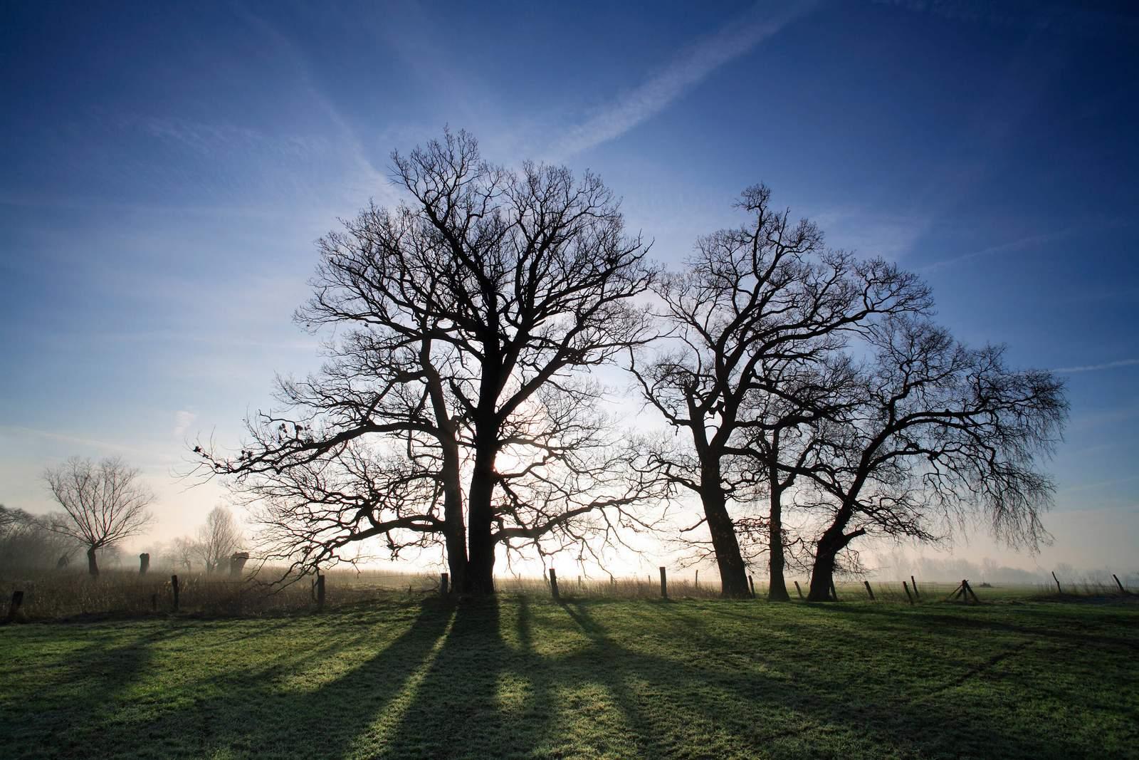 Bäume im Sonnenlicht